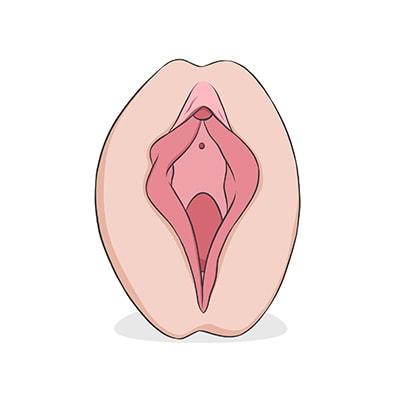 vulva%20herradura