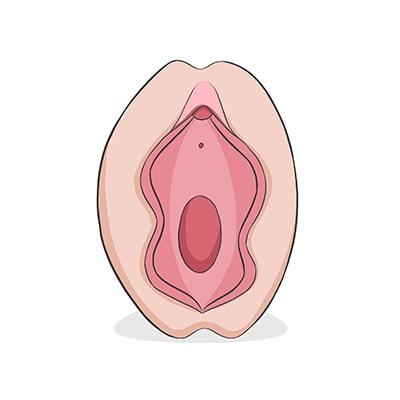 vulva%20mariposa